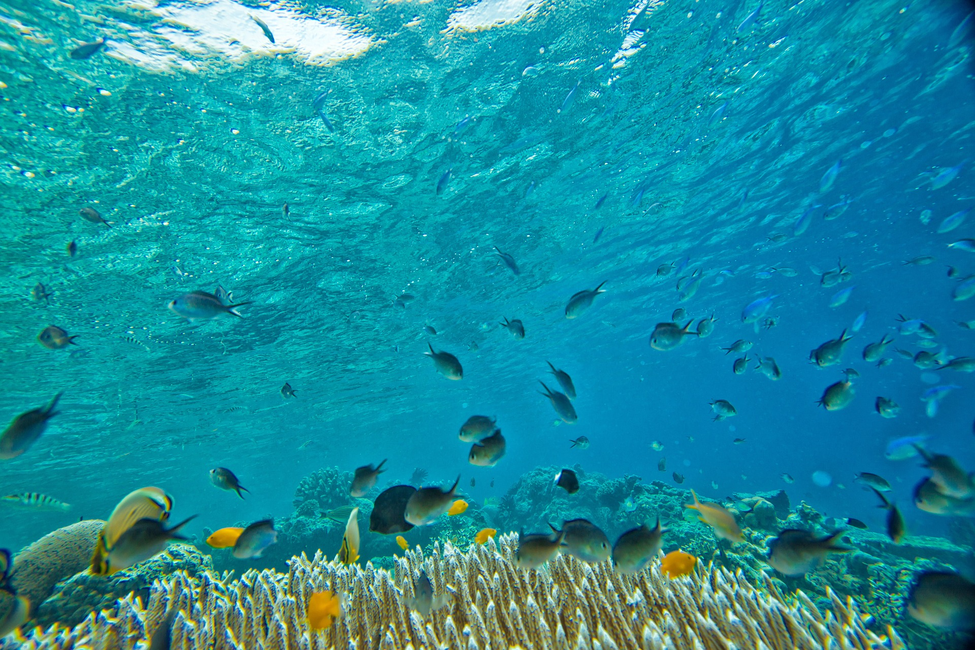 Our snorkelling experience in Indonesia